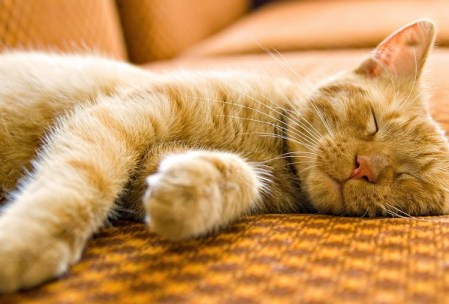 Dormir con tu gato