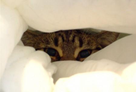Gatos malitos