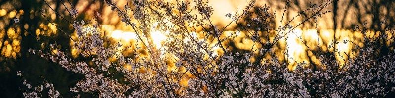 Sun Shining through Bushes