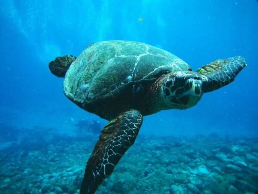 Tartaruga salvata dall'ignoranza degli umani