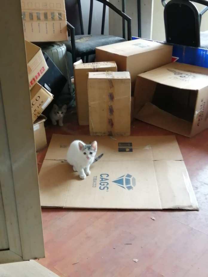 Kartal Belediyesi mahsur kalan kedilere duyarsız kaldı!