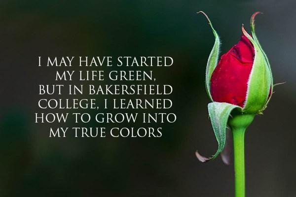 william velasquez rose