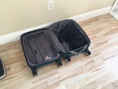 black cat in a suitcase