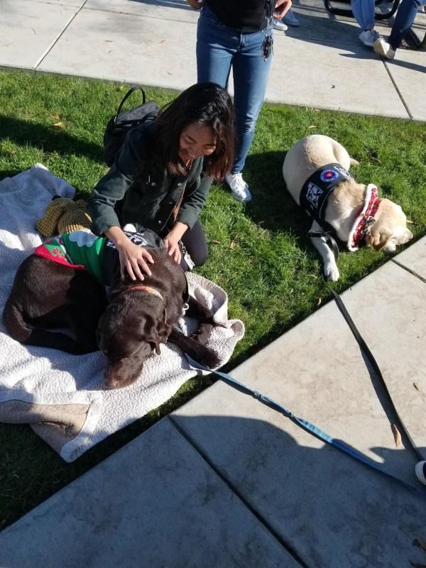 Student petting dog