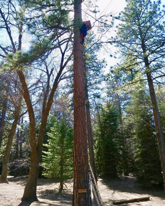 Student high in tree.