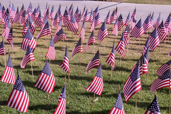 A garden of American flags in the grass.
