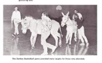 Donkeys on a basketball court.