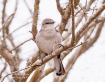 birdsonyaliraphotography15