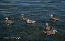 duck21