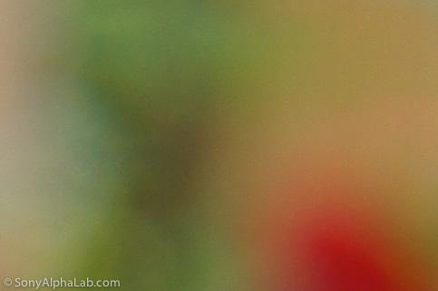 100% Crop - Sony E-Mount 18-55mm f/3.5-5.6 Lens @ f/8, 35mm