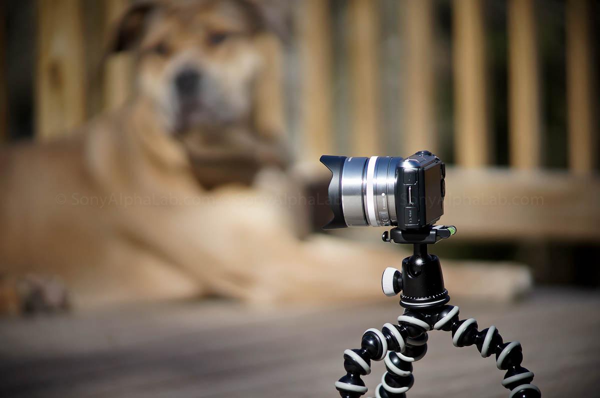 Joby Gorrillapod SLR-Zoom w/ Ballhead and Nex Camera and Lens