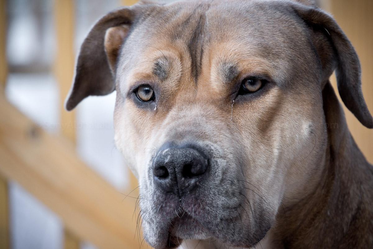 My Dog Chubs - Sony Nex-7 w/ 18-200mm f/3.5-6.3 OS Lens @ f/6.3, 1/200sec, 200mm, ISO 400 - Handheld