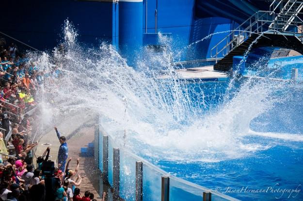 Seaworld - Sony Nex-6 w/ sel55210 lens @55mm, f/5.6, 1/1000sec, ISO 100