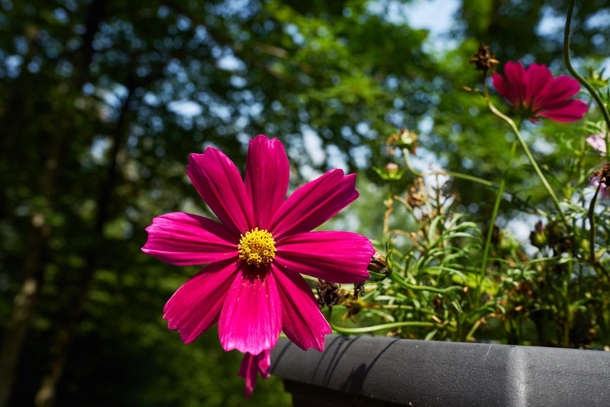 Sony Distagon T* FE 35mm f/1.4 ZA Lens @ F/8