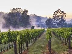 Millbrook Winery - vineyard