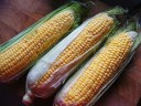 Fresh Sweetcorn
