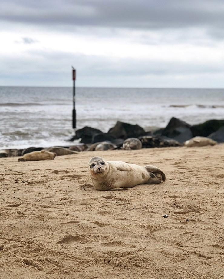 October Seals 2018
