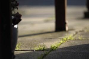 duurzame-dinsdag-onkruid-verdelgen