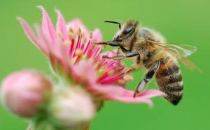 The Wild Bees of Wisdom [Image from the Telegraph U.K.]