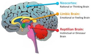 Three main parts of our amazing brain [Source: Not Yet Identified]