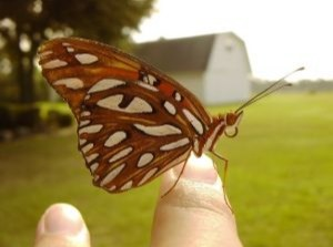 Butterfly on the Finger (Image courtesy of Freepiks.com)