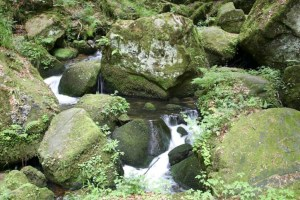 Moss on Stones. Image courtesy of Public Domain Images.