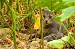 Cat in a field, by John Kovacic. Public domain license.