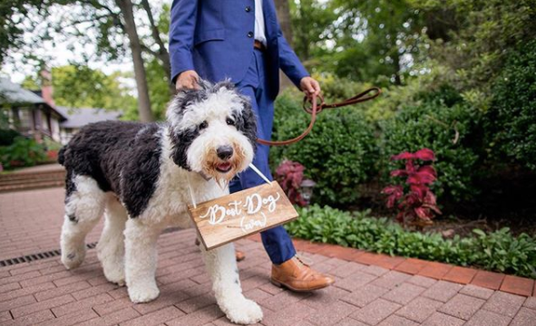 Why you should include your Furry Friend on your wedding day!