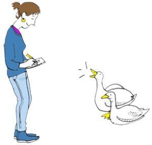 Sophie Coyle Illustration