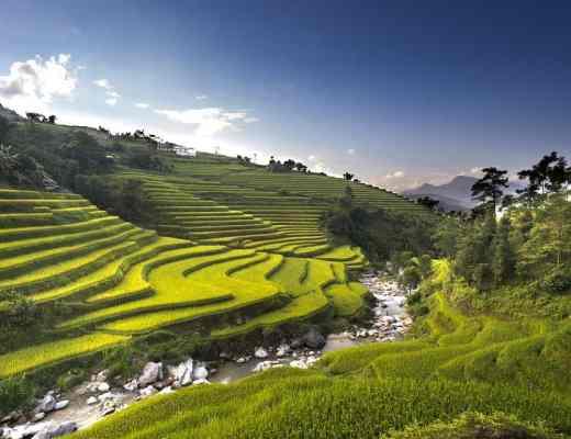 vietnam rice paddies halong bay
