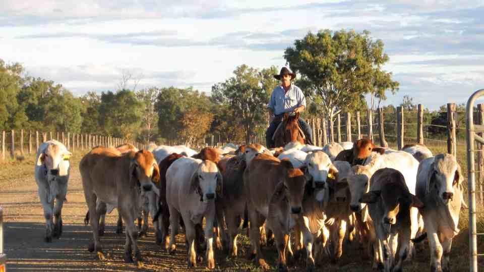 Cattle Station in Australia