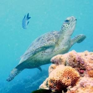 use turtle