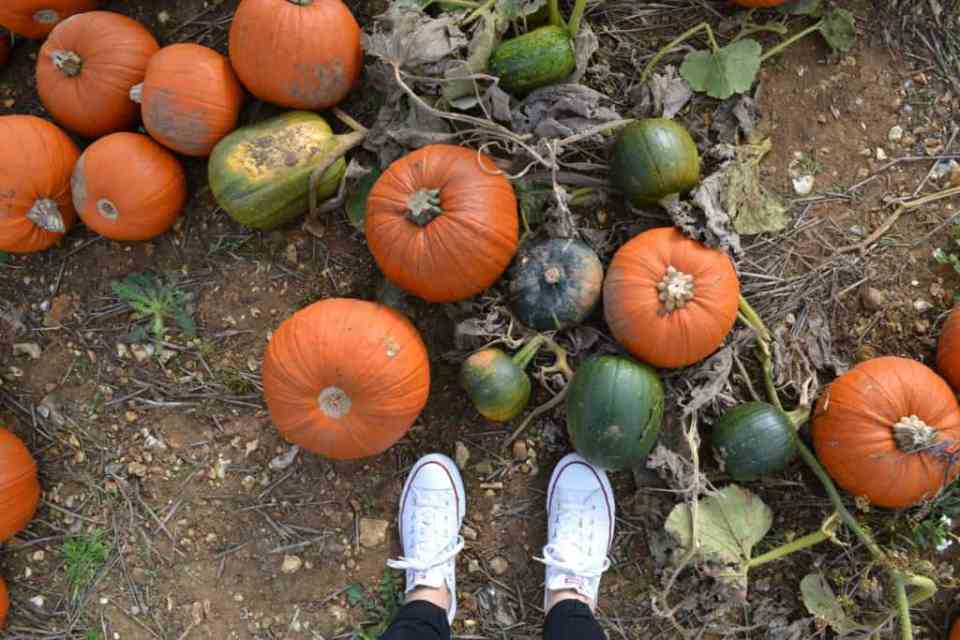 Pumpkin Picking Halloween UK
