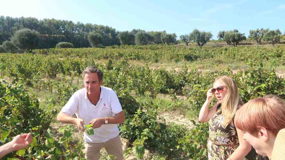 France Provence vineyard tours