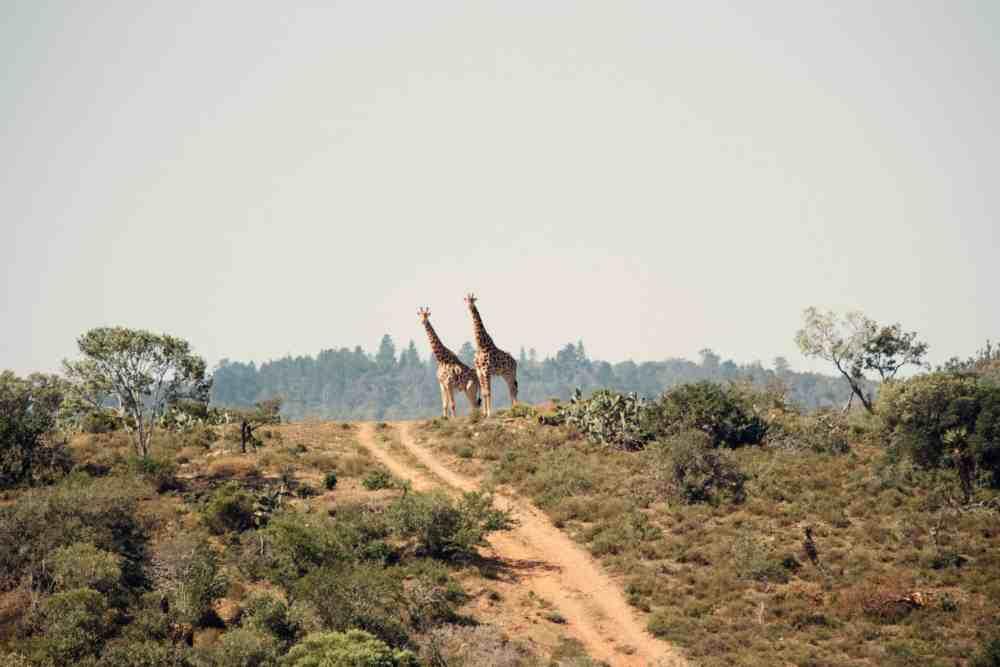 Bucket List Adventures Safari Africa