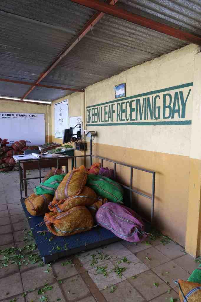 Pedro Tea Factory sri lanka