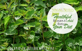 Stinging Nettles 7 Healthful Reasons to Add them to Your Diet - Sophisticated Booty