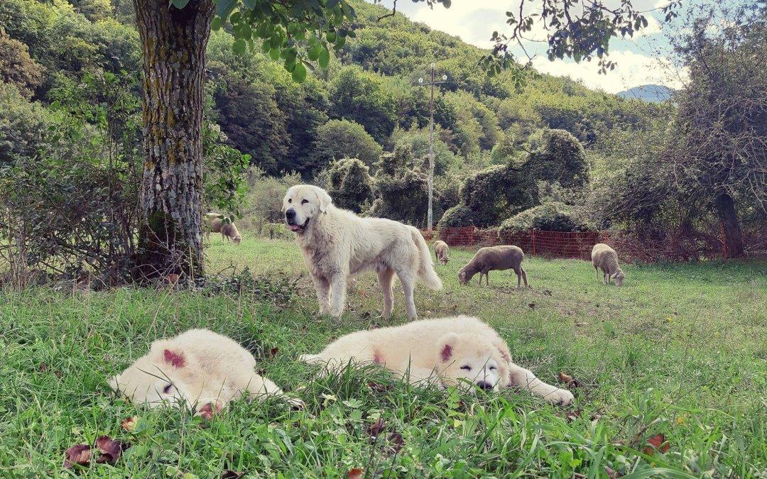 I figli dei nostri cani a lavoro ?