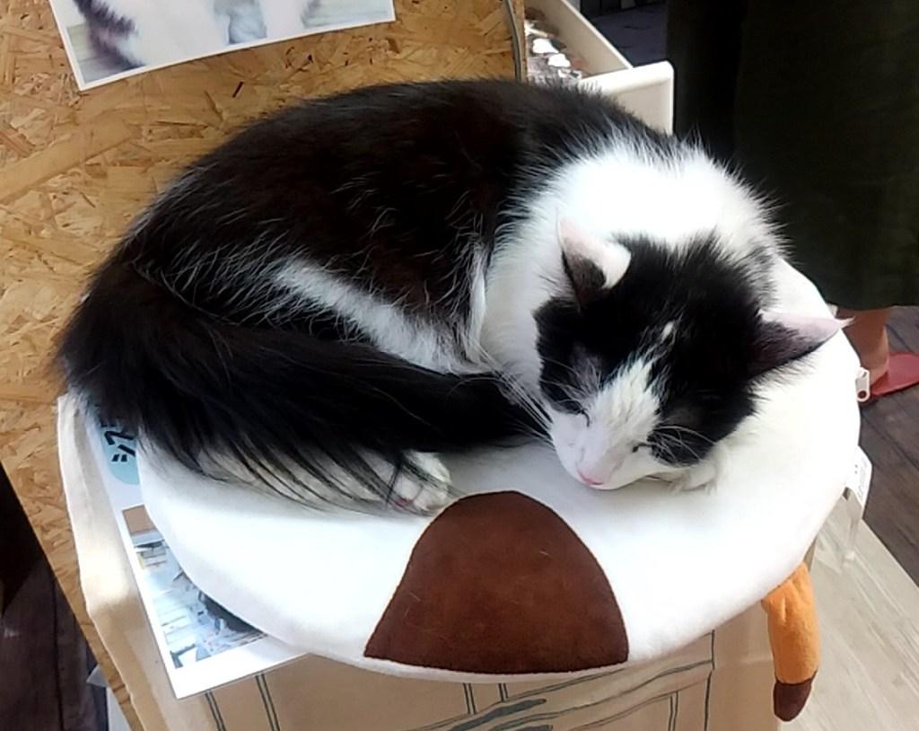 猫カフェ肉灸丸まるねこ