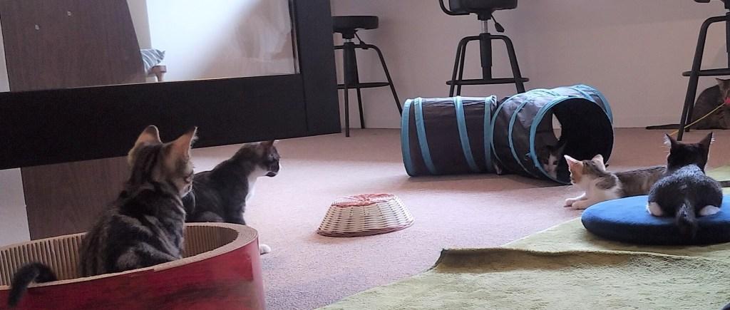 CATLOAF子猫とトンネル