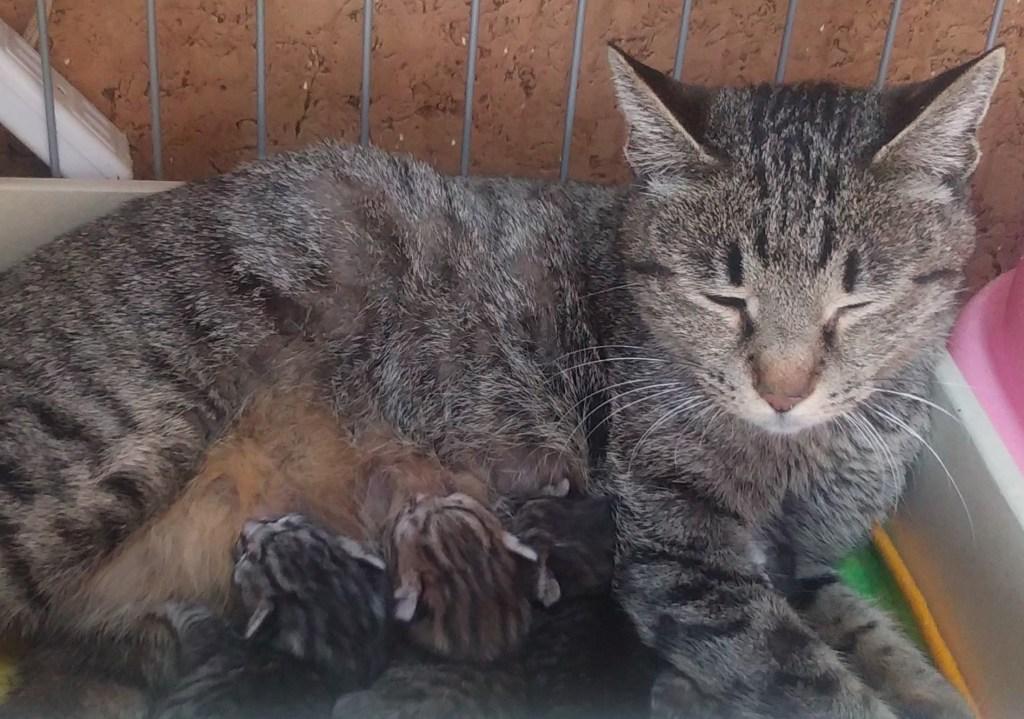 授乳中のお母さん猫