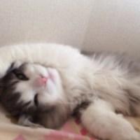 愛猫愛され度チェックーー!!!( *´艸`)猫の行動からわかる愛情表現8選
