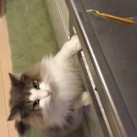 キッチンには猫の夢が詰まっているの?