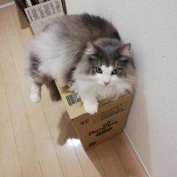 私のストーカーが可愛すぎる問題。猫が飼い主に付きまとう理由