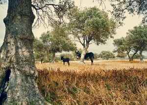 Donkeys, the mother is hiding behind a tree.