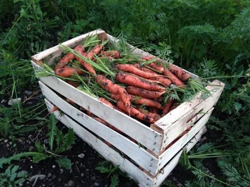 che buone carote
