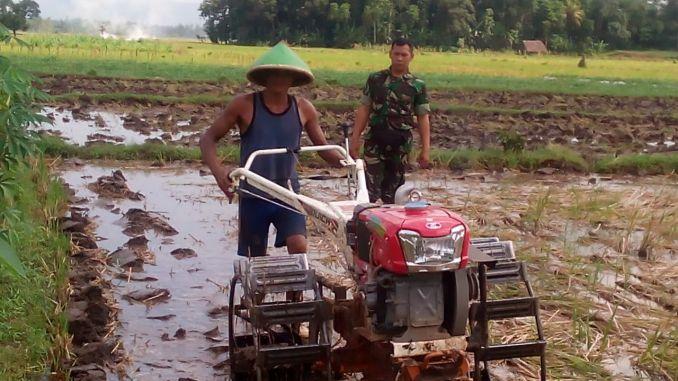 Babinsa Curah Malang Ramil 0824/13 Suport Percepatan Tanam