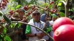 Ketua HKTI Jend. TNI (Purn) Moeldoko saat mengunjungi kebun kopi Puntang Kecamatan Cimaung, Kabupaten Bandung.