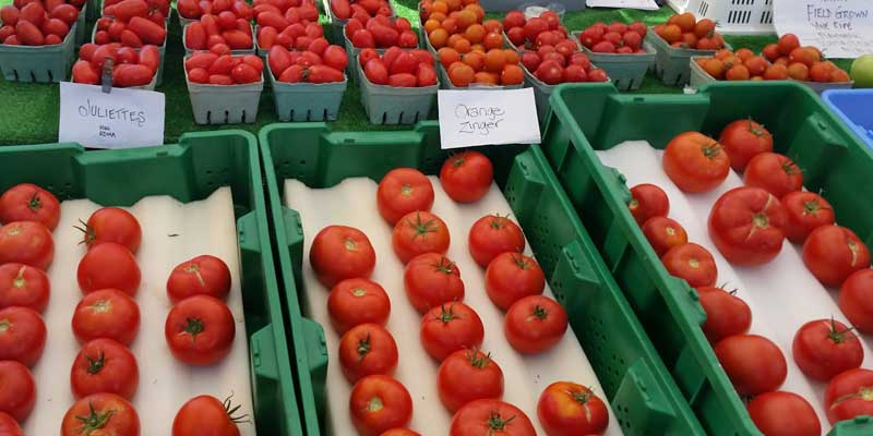 Tomatoes from Tappen Valley