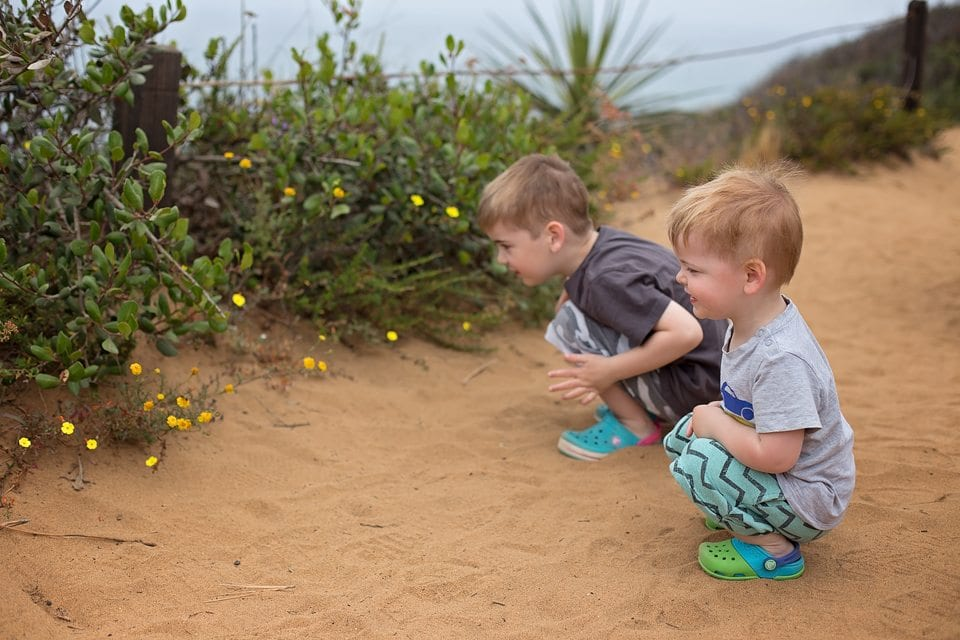 torrey pines reserve toddlers